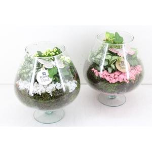 arr. PL - Glas Cognac - roze/wit