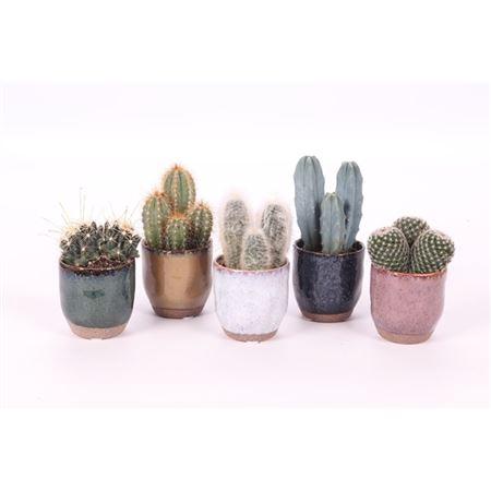 <h4>Cactus 5,5 Cm In Keramiek Sierpot Cinque Terre</h4>