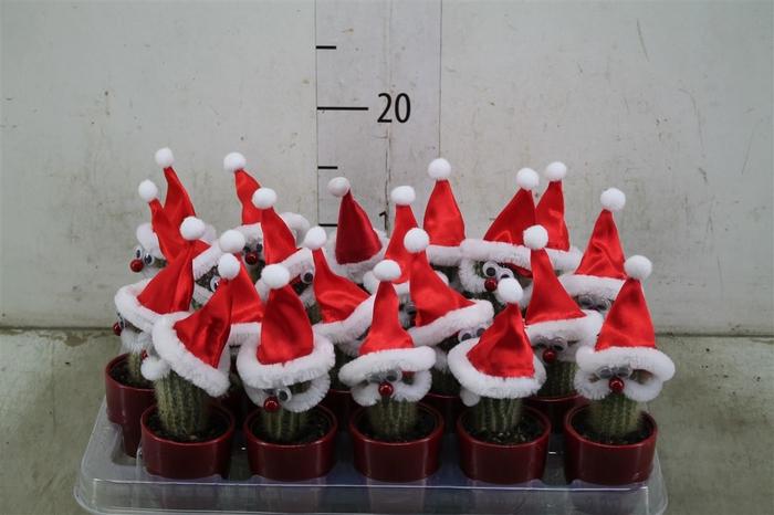 <h4>Cactus Versierd Kerstman Keramiek</h4>