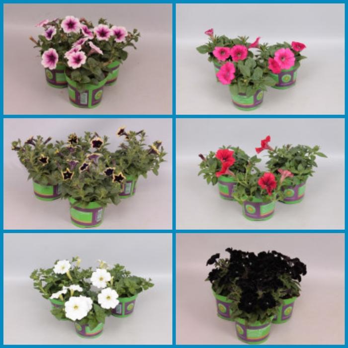 <h4>Perkplanten Divers (mooie selectie van diverse soorten)</h4>