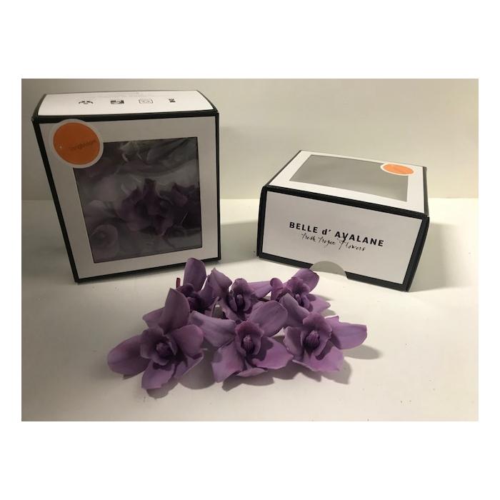 <h4>Cymbidium M purple 369</h4>