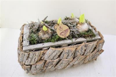 <h4>1435 Driftwood RH HYACINT</h4>