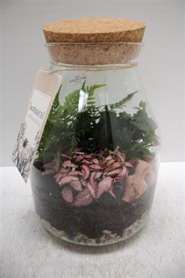 <h4>WDGIG2040 Botanic</h4>