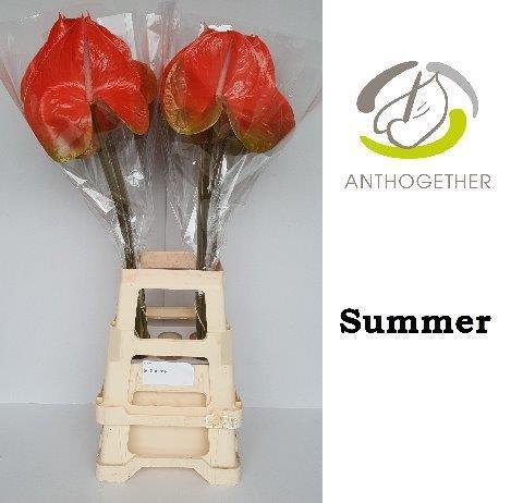 ANTH A SUMMER