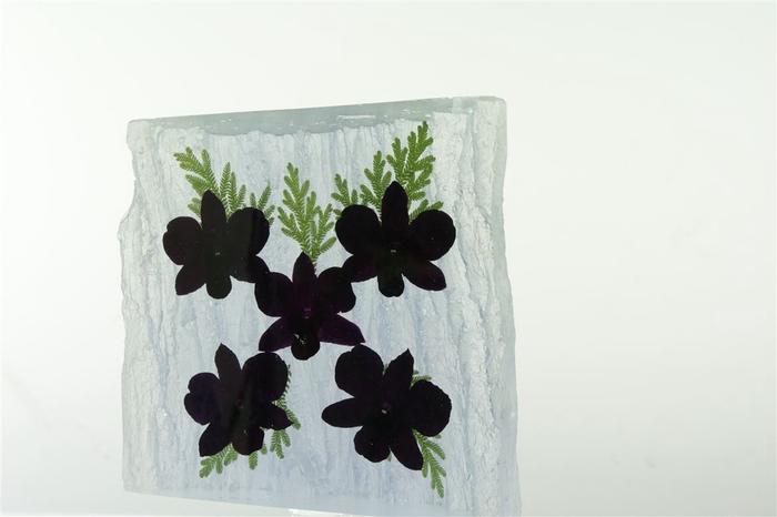 Kristal 5 Dendrobium