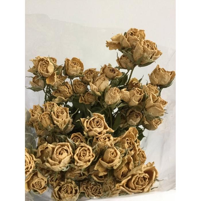 <h4>DRIED FLOWERS - ROOS TROS ECRU 10PCS</h4>