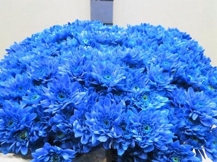 <h4>Chr T Euro Blauw</h4>