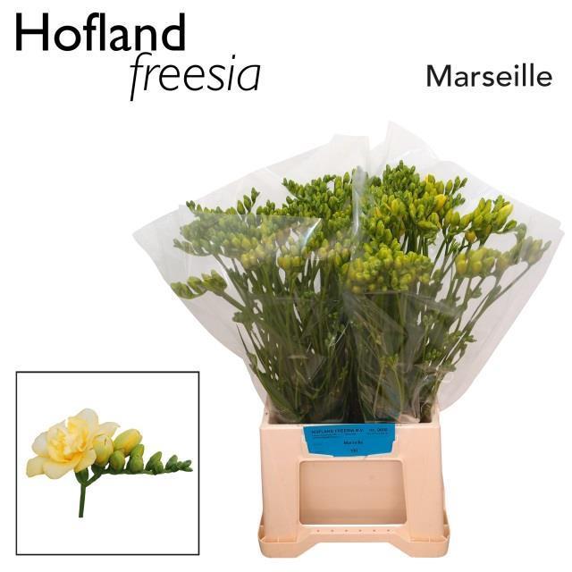 <h4>FR DU MARSEILLE</h4>