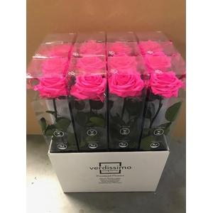 Roos op steel XL plexi bright pink
