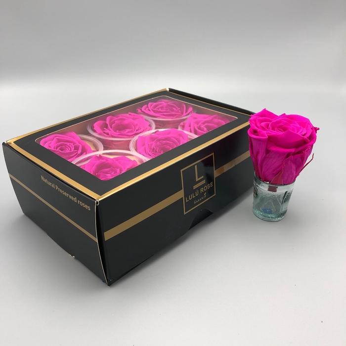 <h4>R PR Lulu (XL) Hot Pink</h4>