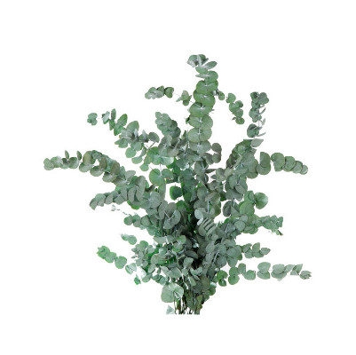 <h4>Eucalyptus Cinerea Green CIN/9105</h4>