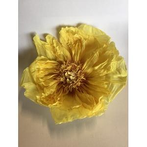 Pioen geel 7-8cm
