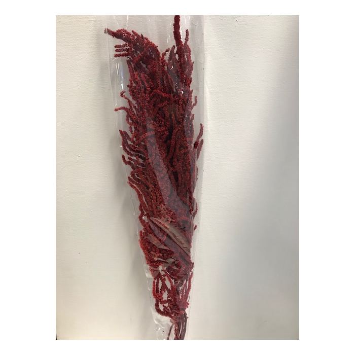 <h4>Amaranthus hang. rood</h4>