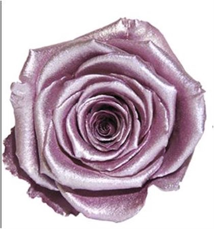 <h4>PRESERVED ROSA LL METALLIC OLD PINK</h4>
