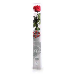 Roos op steel xl Plexi 55cm Red