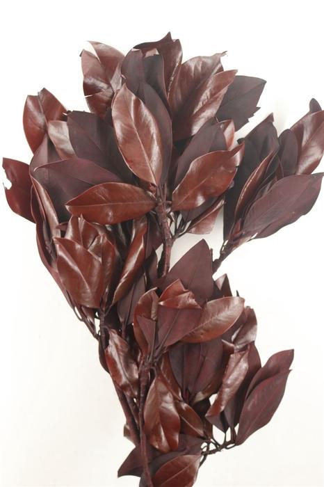 <h4>Pres Magnolia Red Pkg</h4>
