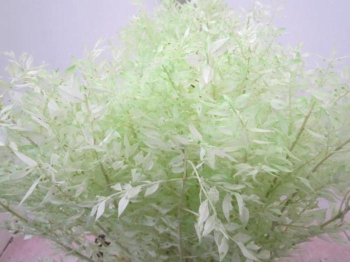 <h4>Ruscus A Gebleekt Licht Groen</h4>