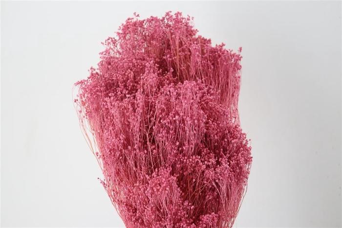 <h4>Pres Brooms Pink 200gr</h4>