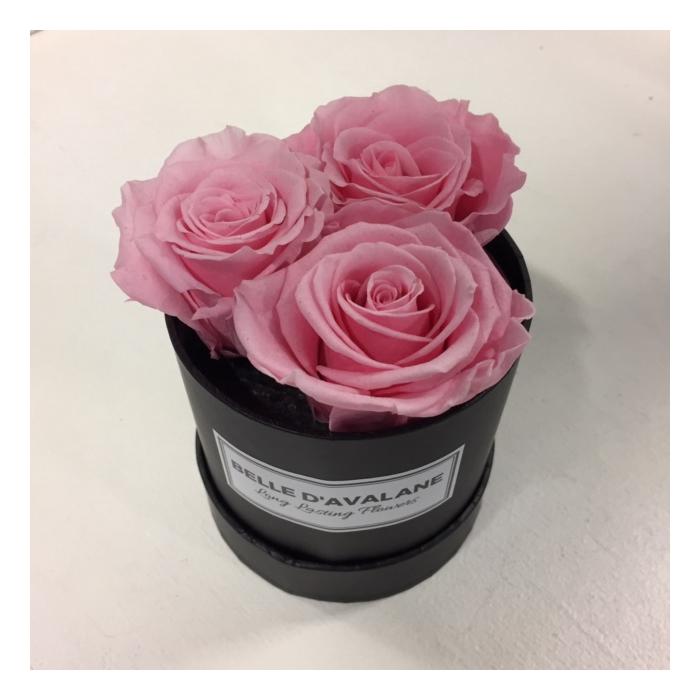 <h4>Flowerbox rd 10cm stabi roos</h4>