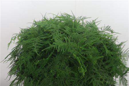 <h4>Asparagus Medium</h4>