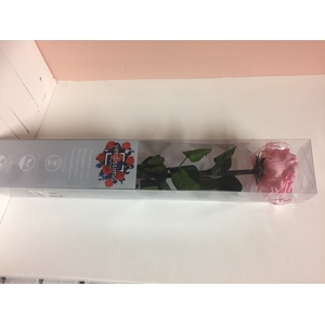 Roos op steel xl Plexi 55cm Pastel pink