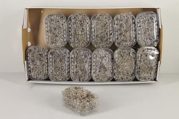 <h4>Moss Tillandsia Box Natural</h4>