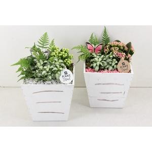 arr. PL - Hout 4kant taps - roze/wit