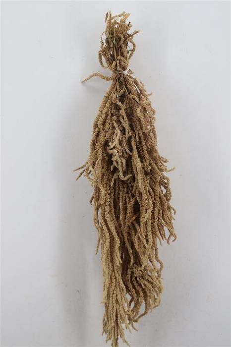 <h4>Dried Amaranthus Caud. Green Pbs</h4>