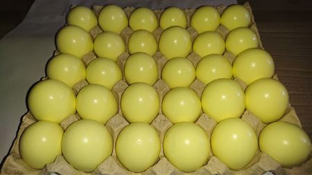 <h4>Tray/30 Hens egg yellow</h4>