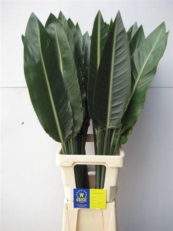 <h4>Strelitziablad Ø 10cm</h4>