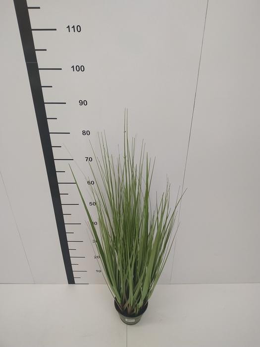 """<h4>36"""" Grass W/Pot verde</h4>"""