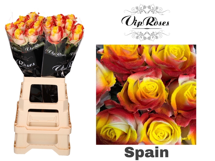 <h4>R GR FLAG SPAIN</h4>