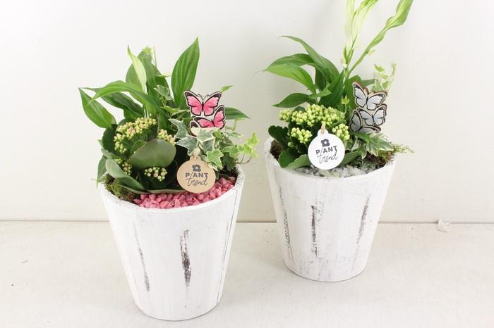 <h4>arr. PL - Hout pot white - roze/wit</h4>