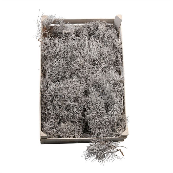 <h4>Iron Grass White Frosted</h4>