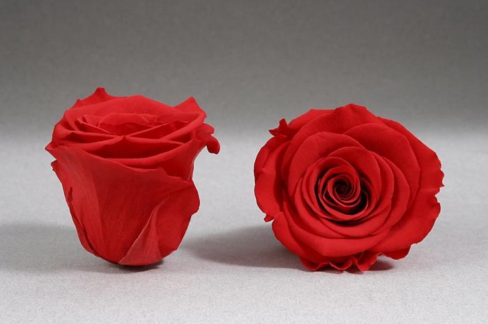 <h4>Rose stab. XL Red-02</h4>
