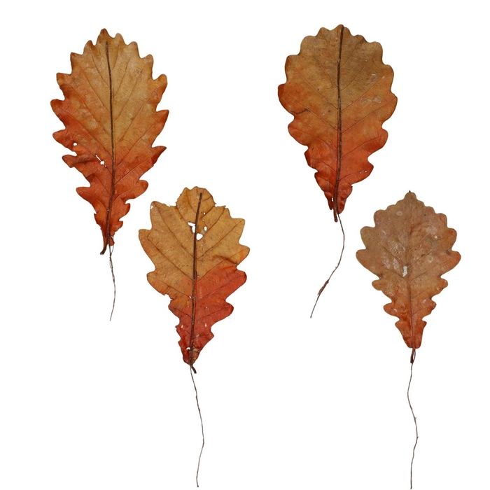 <h4>Autumn Oak leaf wax/wire x150</h4>