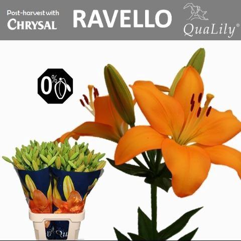 <h4>Li La Ravello</h4>