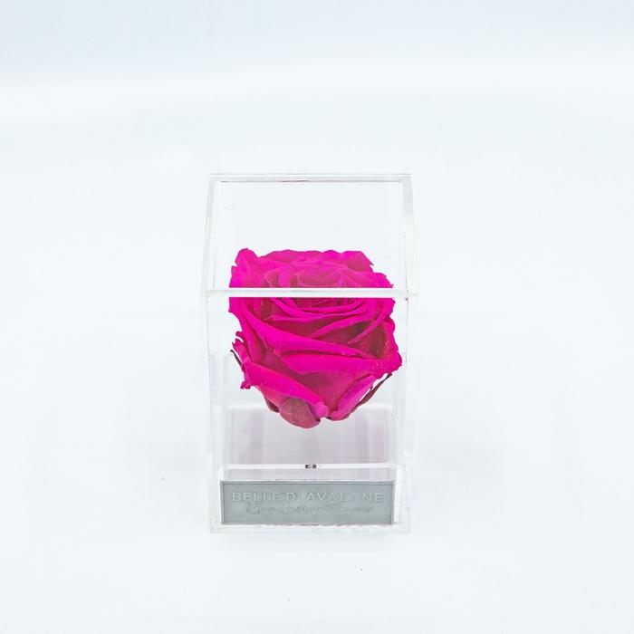 Plexi 7cm fuchsia roos