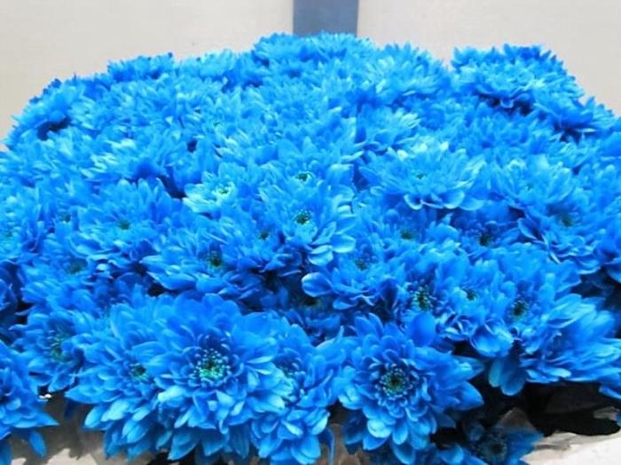 <h4>Chr T Euro Licht Blauw</h4>