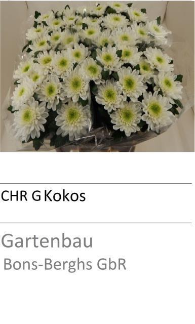 <h4>CHR G KOKOS</h4>