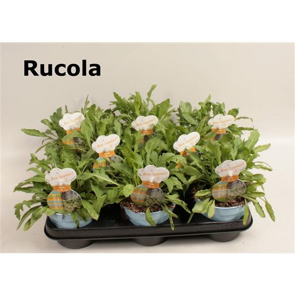 <h4>Wilde rucola</h4>