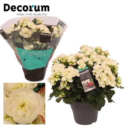<h4>Betulia White Outdoor Decorum</h4>