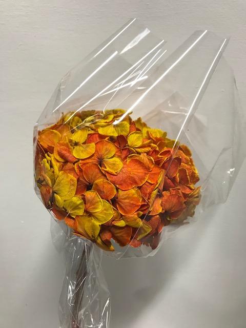 <h4>Hydrangea / Hortensia d15cm geel/rood</h4>