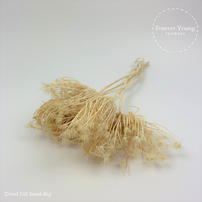 <h4>Dried Dill Seed Bleached</h4>