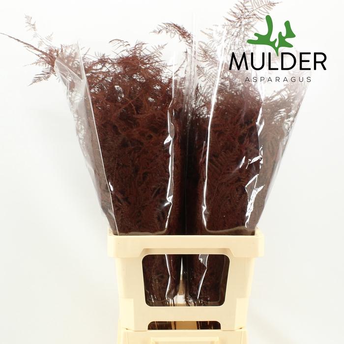 <h4>65cm Extra V. KLB H% Bordeaux</h4>