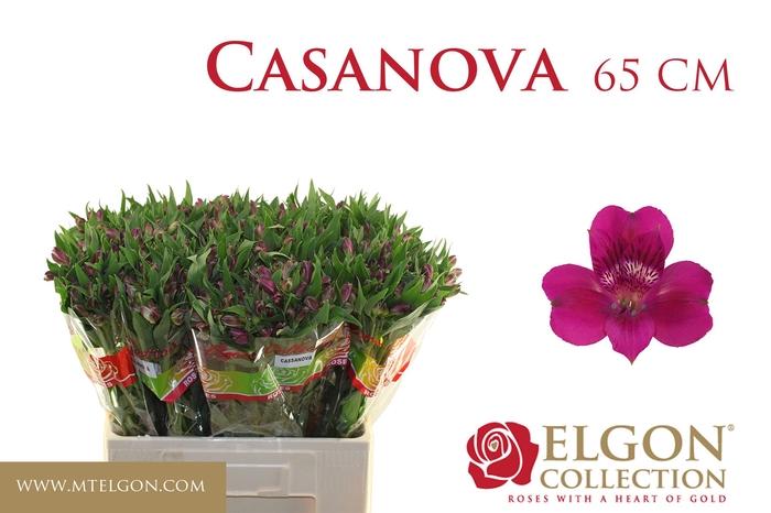<h4>ALSTR CASANOVA</h4>