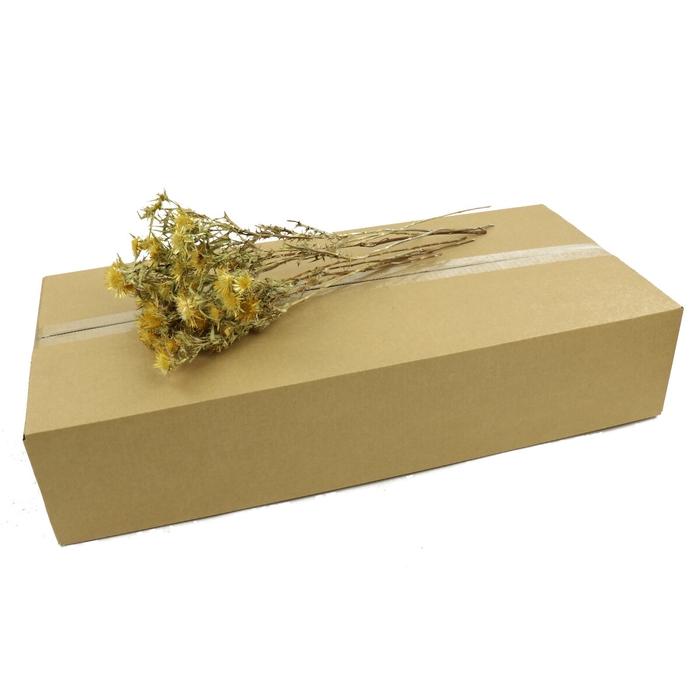 <h4>Dried flowers/box Cardi Spray 70cm</h4>