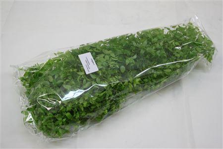 <h4>Asparagus Asparagoides ( Hollands )</h4>