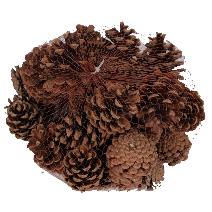 <h4>Pine cone 500gr in net natural </h4>