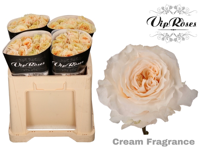 <h4>R GR CREAM FRAGRANC+</h4>
